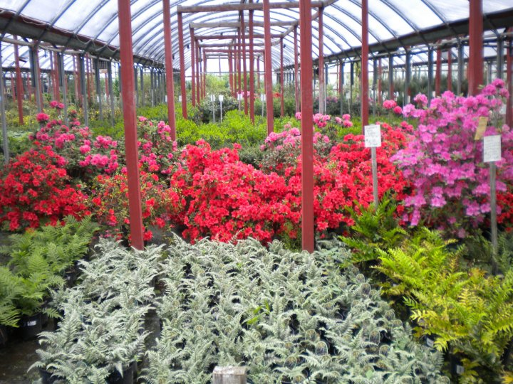 Stringer Nursery Has Been Tulsa S Favorite And Garden Center Since 1957 We Here At Strive To Provide The Best Service With